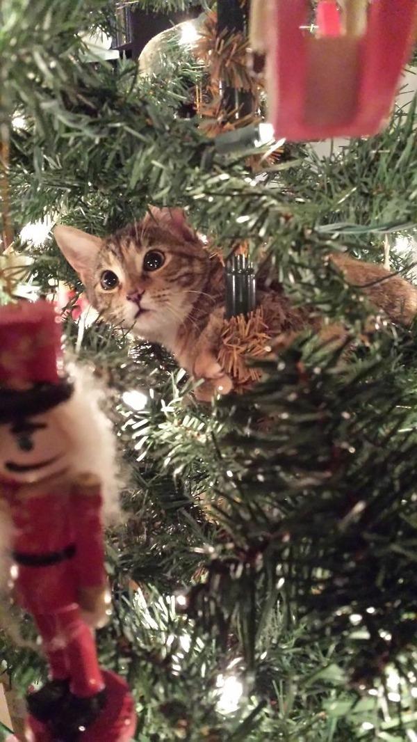 猫、あらぶる!クリスマスツリーに登る猫画像 (46)