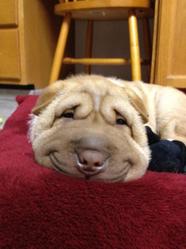 愛嬌たっぷりな笑顔を振りまくわんこ達!【犬画像】 (1)