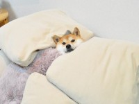 寝る犬!ベッドで眠る犬のかわいい姿。おやすみ犬!