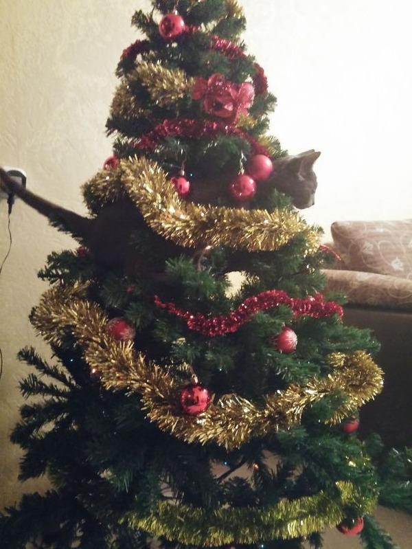 猫、あらぶる!クリスマスツリーに登る猫画像 (45)