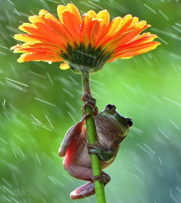 自然の傘を差す動物 17