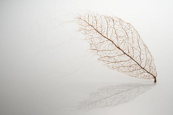超繊細!人間の髪の毛で作るリアルな木の葉 (3)