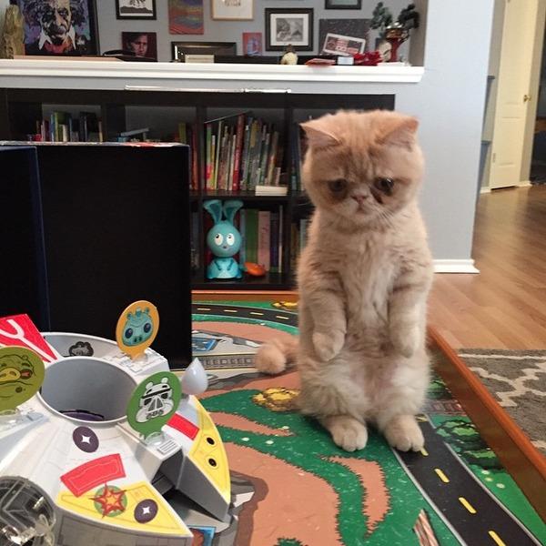 二足で直立する猫 9