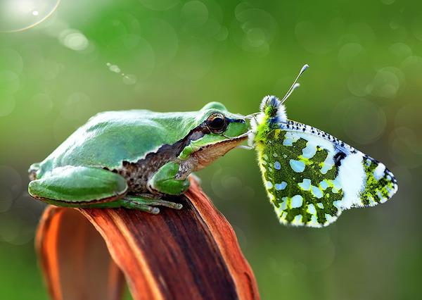 蝶とカエル