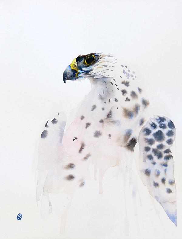フクロウやワシなどの鳥類を描いたカラフルな水彩画 (10)