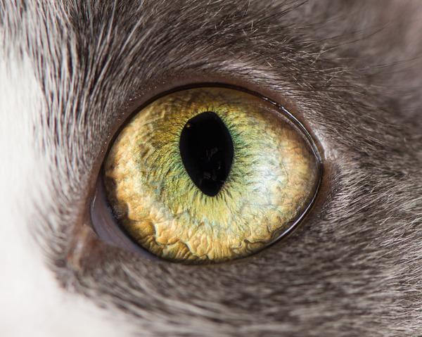 まさにキャッツアイ!綺麗な猫の瞳を撮影した画像16枚 (7)