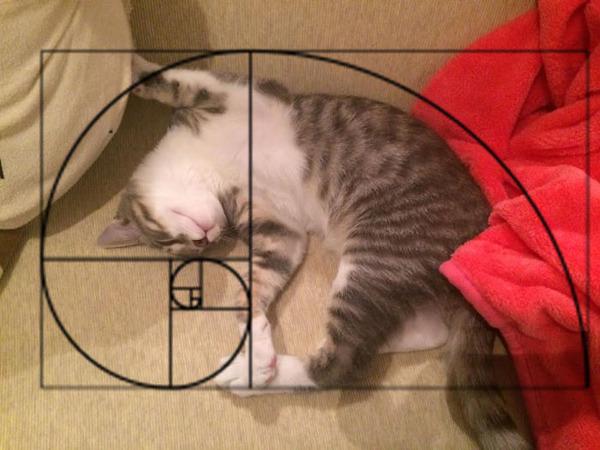 猫と黄金比の関係画像!猫の美しさの秘訣は黄金比にあり (3)