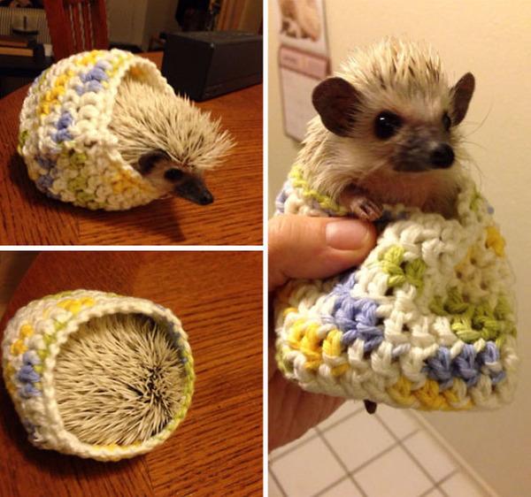 寒いからニットのセーターを小動物に着せてみた画像 (25)