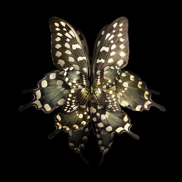 蝶々や昆虫の翅(はね)を合成して作った花の写真シリーズ (1)