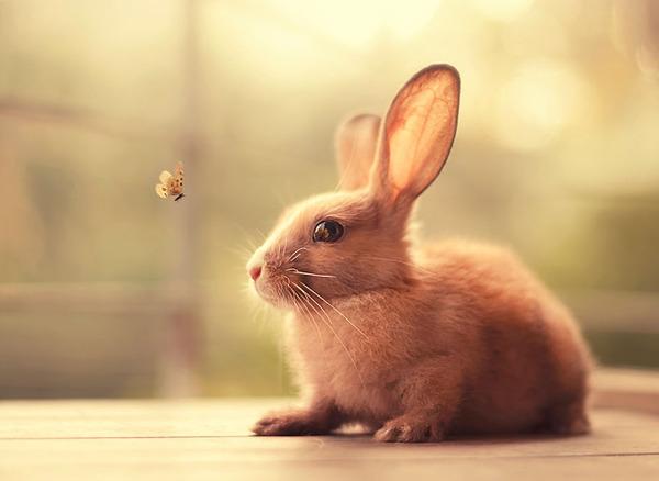 蝶々と遊ぶウサギ