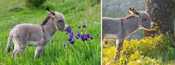 くんくん良い香り。花の匂いを嗅ぐ動物たちの画像 (35)