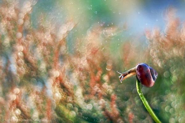 メルヘンチック!カタツムリの小さな世界を激写 (12)
