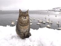 【猫】極寒の中ひたすら寒さに耐える猫が可愛すぎる