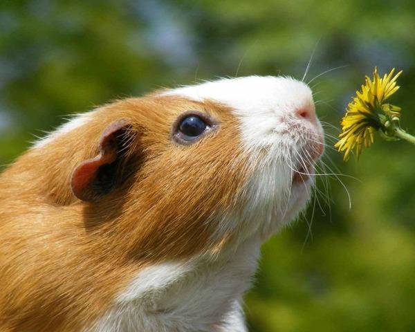 くんくん良い香り。花の匂いを嗅ぐ動物たちの画像 (32)