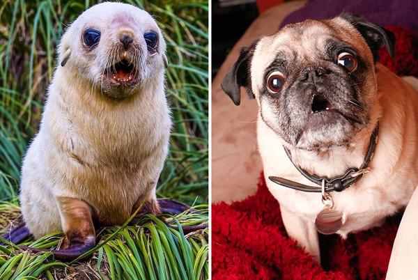 アザラシって犬そっくりじゃね?犬とアザラシを比較画像! (21)