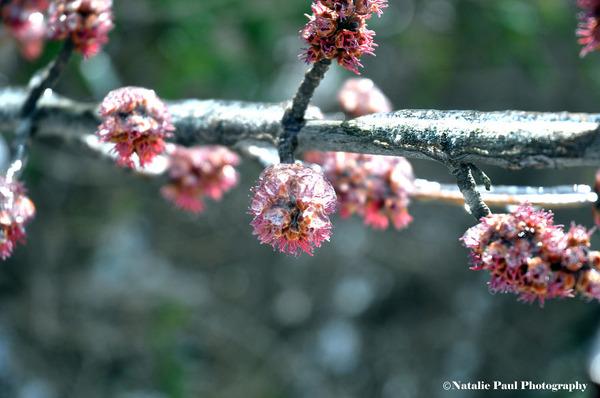氷霧の後の花4