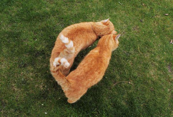 猫のバレンタインデー!【猫ラブラブ画像】 (25)