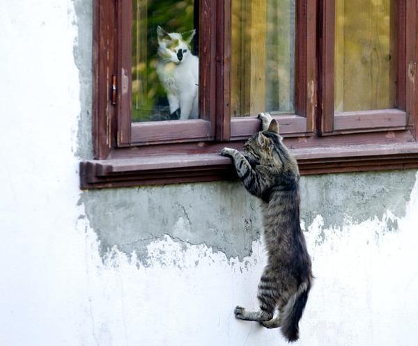 猫のバレンタインデー!【猫ラブラブ画像】 (8)