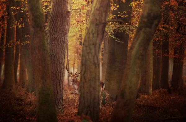 紅葉や秋の森の中を楽しむ動物たちの画像 (23)