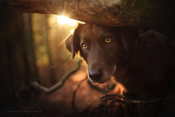 秋が来た!紅葉と遊ぶ犬画像 (7)