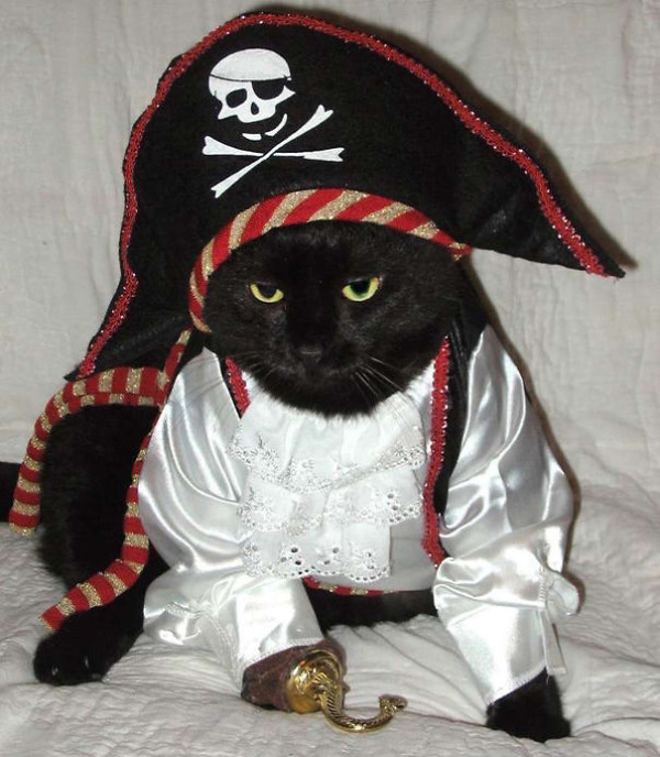 コスプレ猫!ハロウィンだし仮装した猫画像 (11)