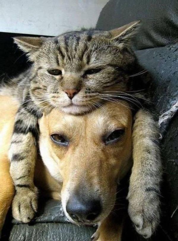 犬の頭の上に猫