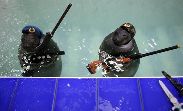 SEALS,ロシアのオットセイの軍事訓練、VEデー 4