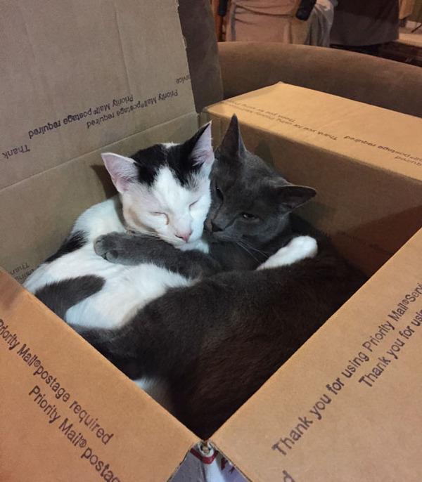 猫のバレンタインデー!【猫ラブラブ画像】 (61)