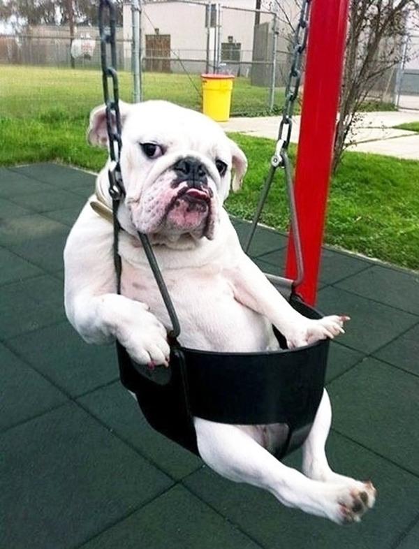 モデルのようにポーズを取る可愛い動物特集 犬 5