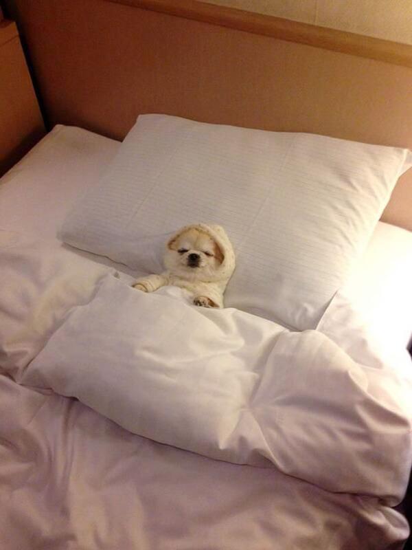 ベッドで寝る犬 かわいいおもしろ画像 4