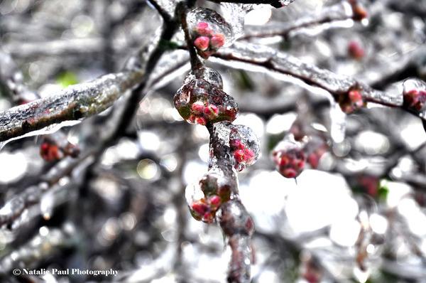 氷霧の後の花6
