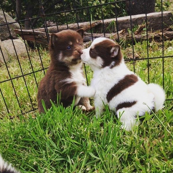 子犬のキス 25
