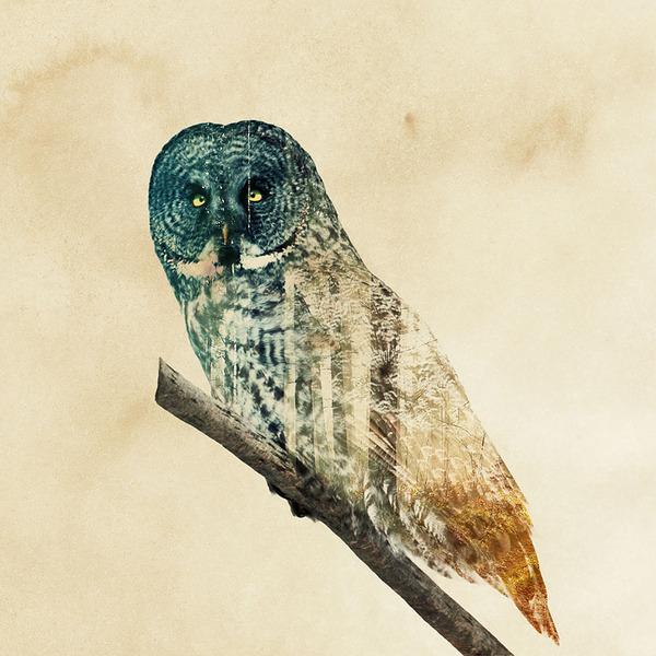 フクロウの二重露光写真byアンドレアス・リー 2