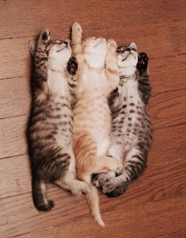 3匹揃っておやすみ