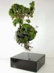 自然と融合する人間の部位や人工物を描いた植物の彫刻