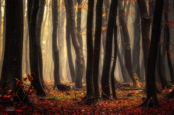 秋といえば紅葉や落葉の季節!美しすぎる秋の森の画像20枚 (15)