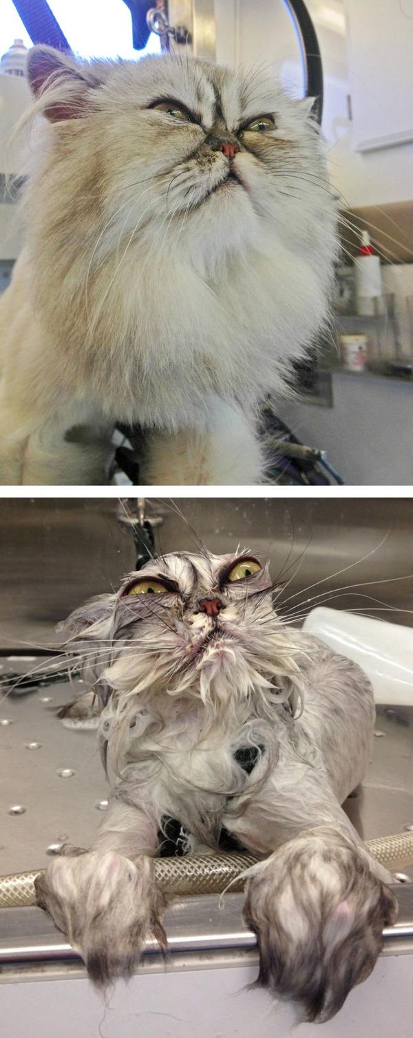 もふもふな動物たちがお風呂で変貌する…!【犬猫画像】 (16)