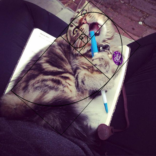 猫と黄金比の関係画像!猫の美しさの秘訣は黄金比にあり (9)