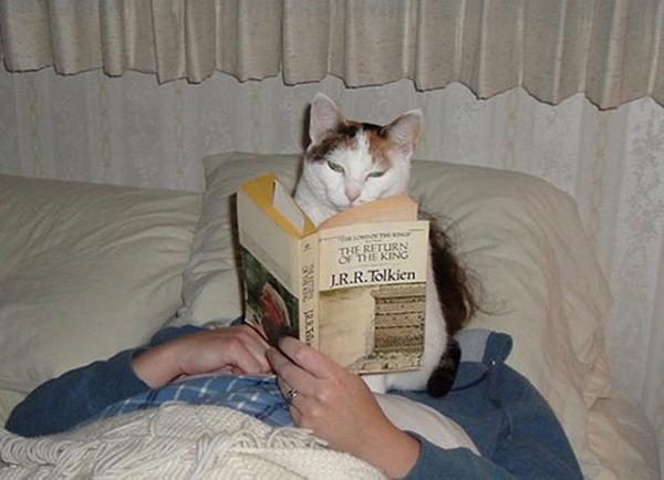 どうしても邪魔したい猫