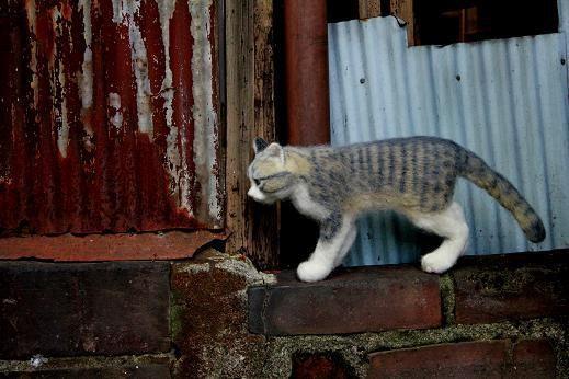 羊毛フェルトのリアル猫人形7