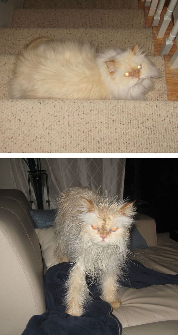 もふもふな動物たちがお風呂で変貌する…!【犬猫画像】 (17)