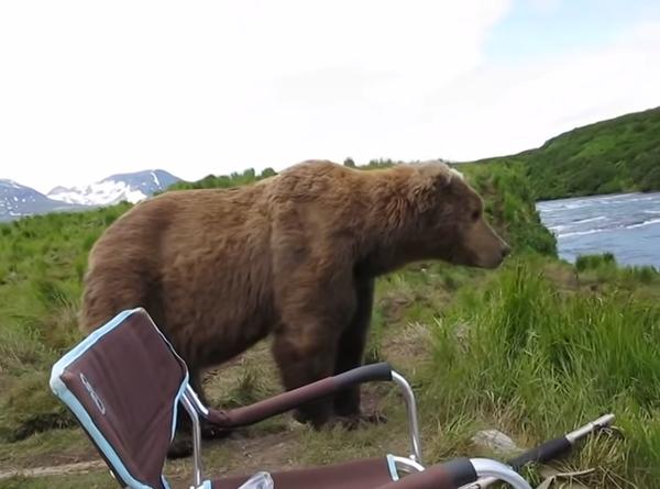 熊が接近してきた