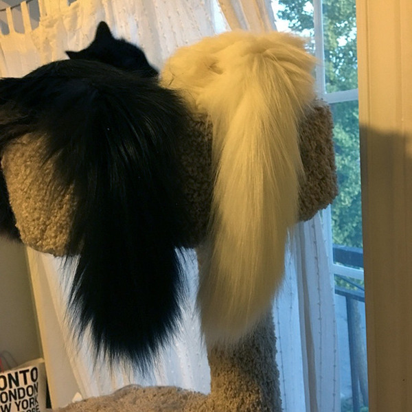 黒猫と白猫どっちが好き?どっちも可愛すぎ【猫画像】 (19)