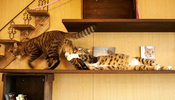 猫のバレンタインデー!【猫ラブラブ画像】 (58)