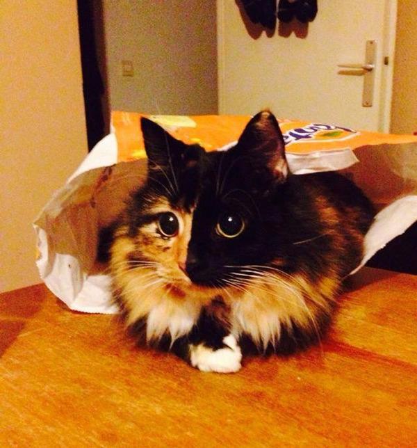 盲目の迷い猫。珍しい毛色のキメラネコが愛を知る (8)
