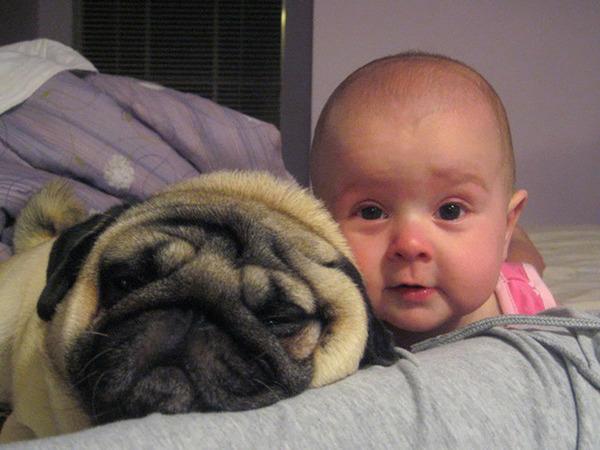 ペットは大切な家族!犬や猫と人間の子供の画像 (58)