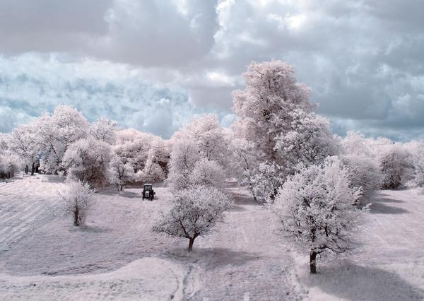 IR(赤外線)カメラで撮影されたポーランドの自然写真が美しい (3)