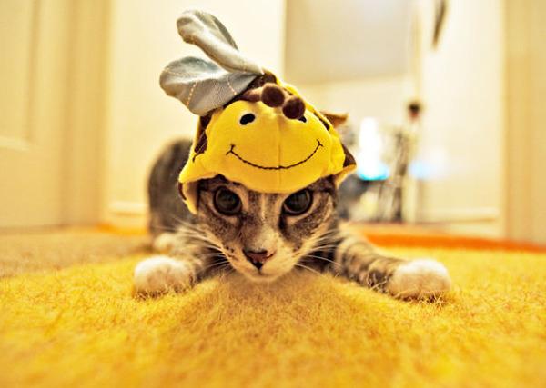 コスプレ猫!ハロウィンだし仮装した猫画像 (17)