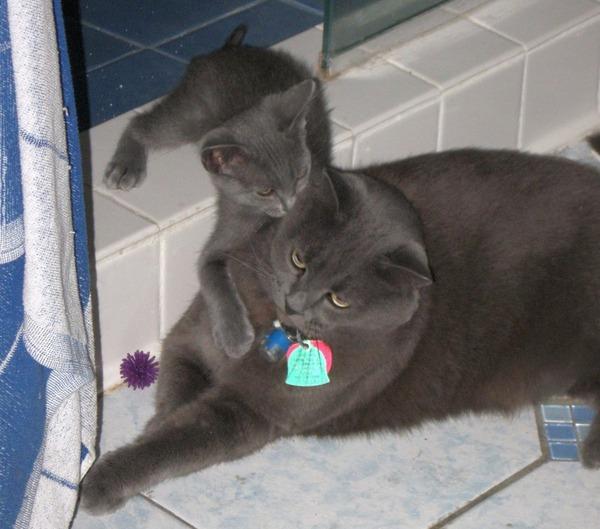 大人猫と子供猫の仲良し画像 (5)