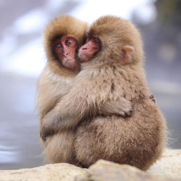 抱きしめあうサル